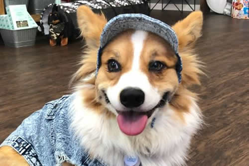 sutter creek pet store with clothing for dogs