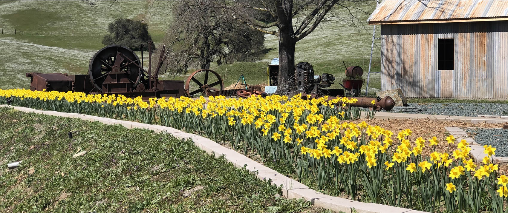 spring in sutter creek